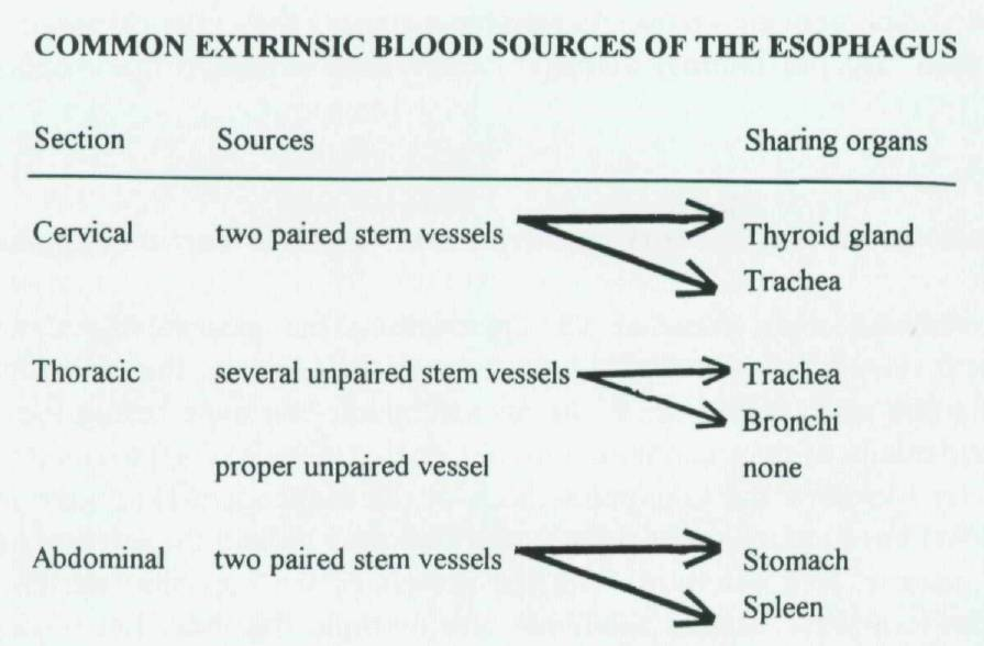 What are the characteristics of the normal blood supply of the ...