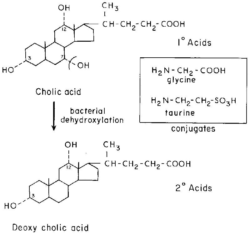 Are Physiological Bile Acids Toxic To The Esophagus In An Acid